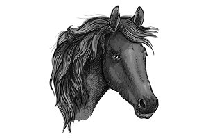Sketch of arabian black horse