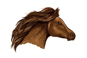 Sketched brown horse head