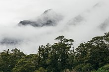 Rain Forest #01