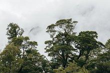 Rain Forest #02