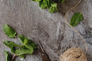 Sprig of garden mint on a gray stone background with vintage scissors and old ropes. Top view