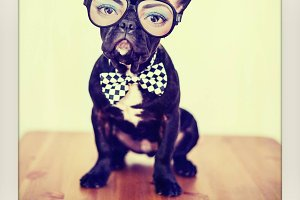 Dogs in Glasses