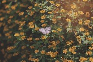 Butterfly Pattern 01