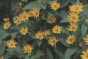 Yellow Pattern Flowers 01