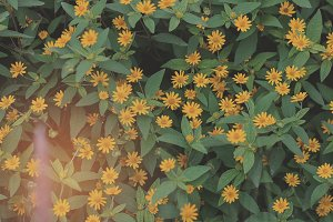 Yellow Pattern Flowers 02