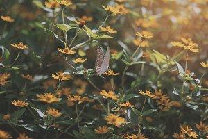 Butterfly Pattern 02