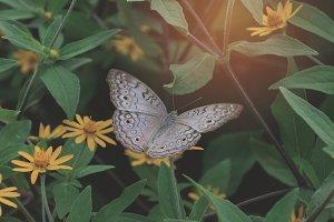 Butterfly Pattern 04