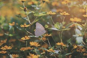 Butterfly Pattern 03