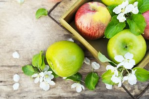 Fresh red and green apples with flowers in sunny garden