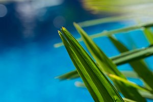 Water surface background with palm leave