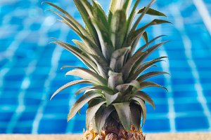Fresh pineapple near swimming pool