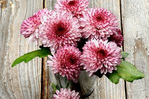 Bunch of Pink and Red Chrysanthemum