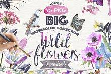 Wild flower pack 75