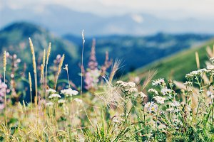 Mountainside Wildflowers