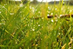 Krople w trawie