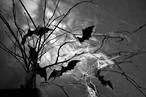 bats on the branches shrouded