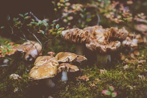 Wet Mushrooms in the Forest