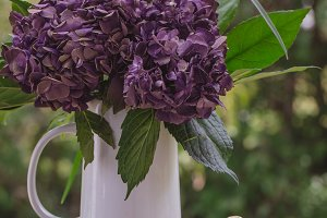 Purple Hydrangea in White Vase