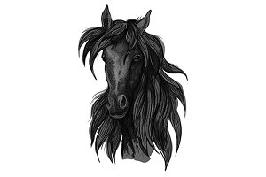 Arabian horse head sketch