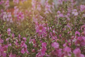 Pink Flowers 05