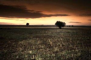 Sunset in Spanish fields