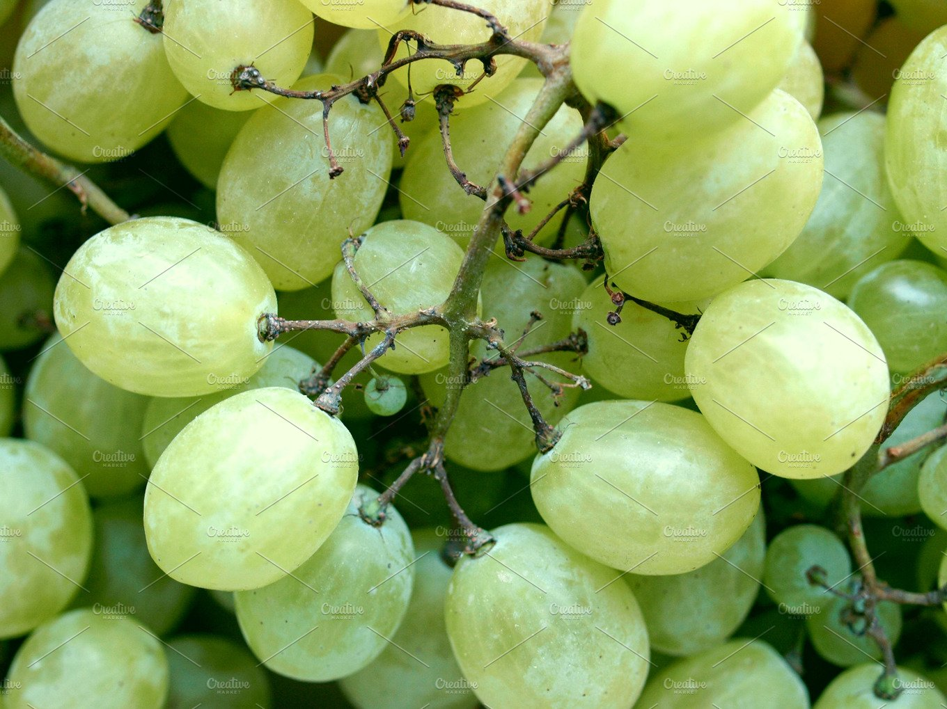 what to include in a cover letter grape food amp drink photos creative market 25587 | izsatjrr0ysup2vztsvb0qsmhbhlqdj1mqxclbdiaqilb9rnyq9h3wzgvcq4n9p6