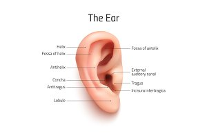 Realistic infographics ear icon.