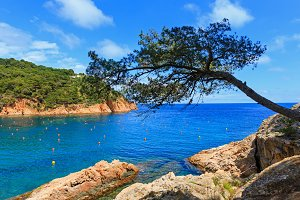 Pine tree above sea