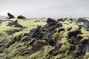 Icelandic Moss and Dark Lava Rocks