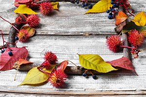 leaves and herbarium