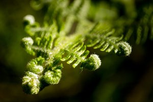 Fern closeup