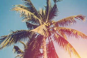 Vintage coconut tree