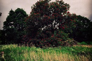 Red Blossoms in Goth Landscape