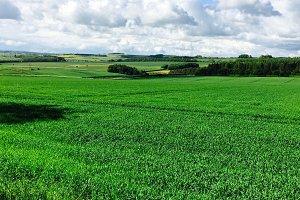 Green English Countryside