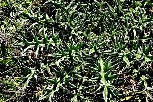 wild thorny plant