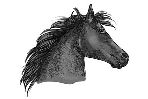 Black racehorse head sketch