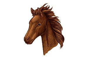 Brown mare horse head sketch