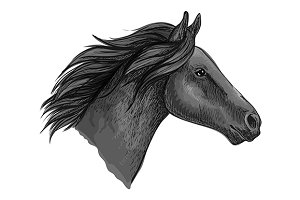 Black stallion horse head sketch