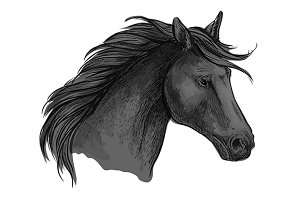 Sketched riding horse head