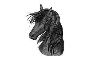 Sketched black horse head