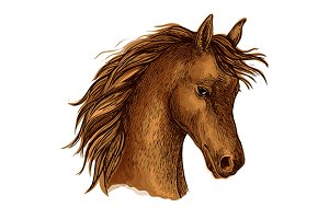 sketch horse head of arabian breed