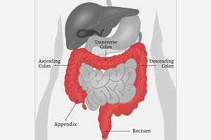 Body Internal Parts