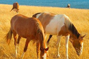 Horses at seashore