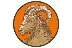 Ram Goat Head Circle Drawing
