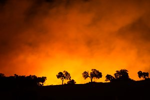 silhouettes of trees in forest fire