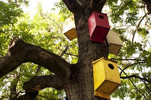 Colorful Bird Houses On Tree Trunk