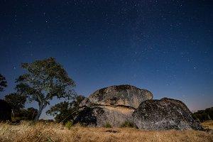 starry sky over tree in savannah