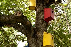 Colorful Bird Houses in Forest