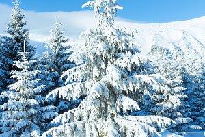 Morning winter Carpathian mountain
