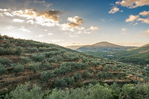 mountains landscape of olive groves